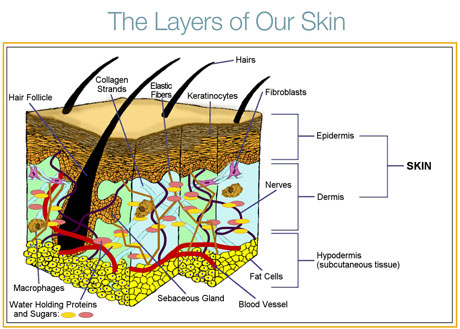 Hairdressing Learner Guide: Skin Structure and Function